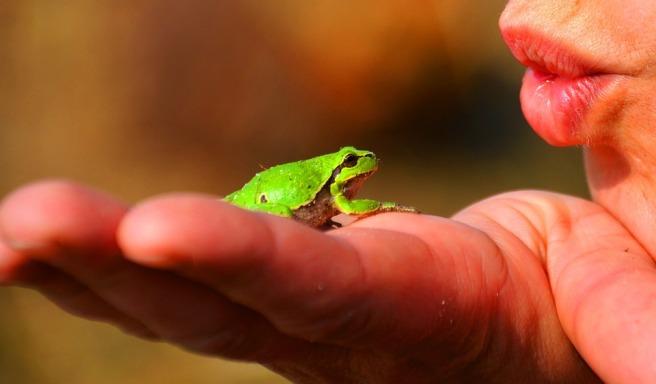 frog-prince-334970_960_720